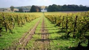 FIETSEN. Van wijngaarden tot mergelgroeven, een fijne rit door Haspengouw