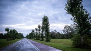 Platanen moeten wijken voor zeldzame vegetatie