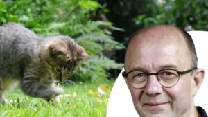 Met kattengras en luierhoekjes: zo maak je van je tuin een poezenparadijs