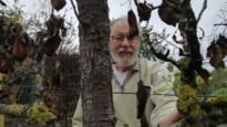 Mirakel in Wijchmaal? Verbrande perenboom bloeit weer