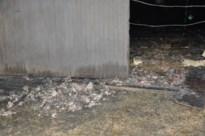 27.000 kippen dood bij nachtelijke stalbrand in Voeren