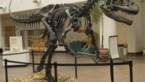 """Skelet van """"grootvader van T-rex"""" verkocht voor meer dan 3 miljoen euro"""