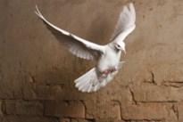 Houthalen-Helchteren verbiedt duiven en rijst bij huwelijken