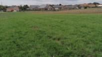Wolf bijt geit dood in weide in Gruitrode: vermoedelijke dader is August