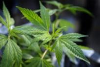 Zeventiger en zoon bouwen cannabisplantage uit in geheime kamer Leopoldsburg