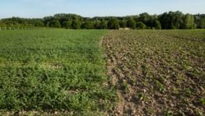 Boerenbond in beroep tegen 10 hectare extra bos in Hasselt:
