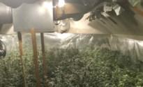 Carwashuitbater in Bilzen riskeert 30 maanden voor cannabisplantage