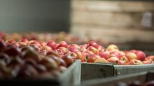 Landbouw houdt stand, ondanks corona
