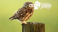 Hoeveel natuur heeft Limburg?