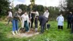 Hasseltse scouts geven het voorbeeld: plant je eigen bos