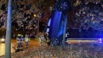 Opmerkelijk ongeval: wagen verticaal geparkeerd tegen boom