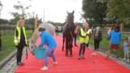 Paard dat van Overijse naar Lummen stapte voor operatie is overleden
