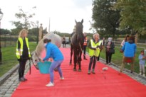Paard stapte van Overijse naar Lummen voor operatie, maar overleefde ingreep niet