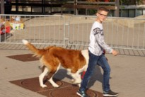Hondenwandeling voor het goede doel