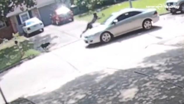 Onfortuinlijke man vlucht voor uitgebroken hond en wordt aangereden