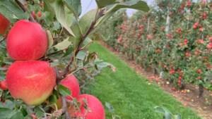 Ook Mexico opent markt nu voor Belgische appels en peren