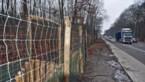 Veel vossen en zwijnen gefilmd op Kamperbaan, maar geen enkele eekhoorn