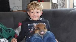Steeds meer mensen halen varkentjes in huis, al denk je er best goed over na