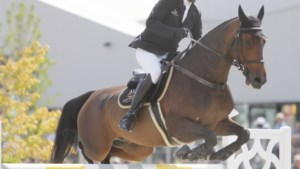 """Het regent afgelastingen in de paardensport maar """"profconcours kunnen wél veilig"""""""