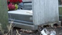 Hoe een konijn het kerkhof van Wellen onkruidvrij houdt
