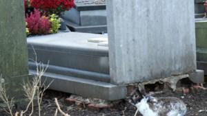 Woppie het konijn houdt kerkhof van Wellen onkruidvrij