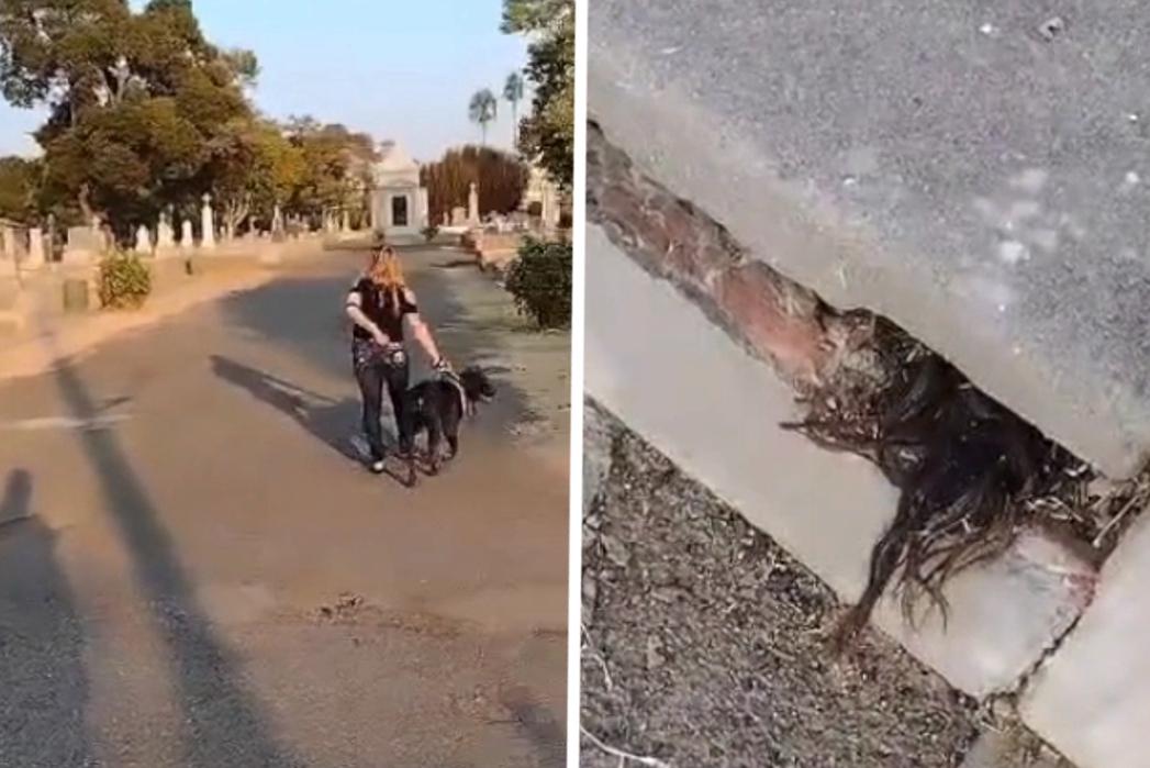 """Man kan ogen niet geloven wanneer hij ziet wat er uit 100 jaar oud graf piept: """"Dat is haar, toch?"""""""