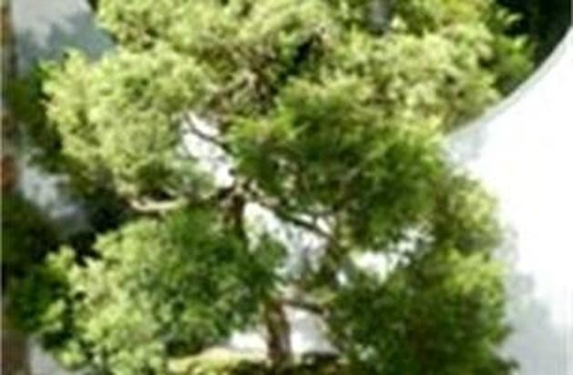 Wat is bonsai?
