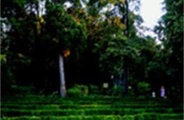 Websites met alle informatie over tuinen en tuinieren