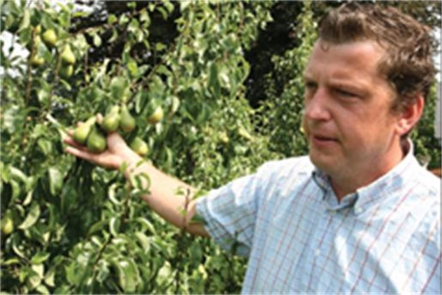 Mooie perenoogst verwacht