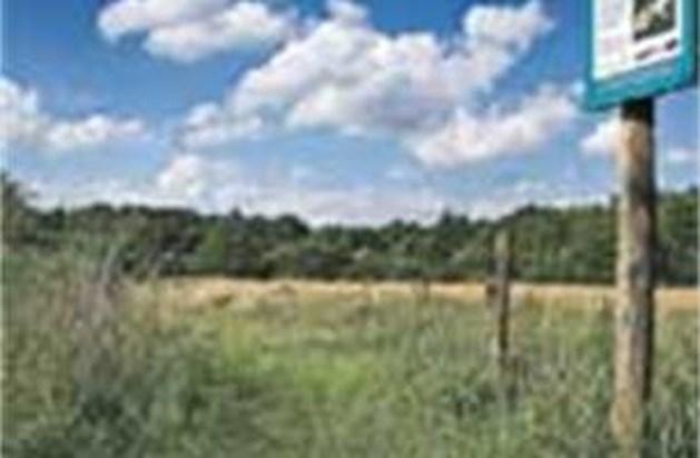 Natuurwerker sterft na twee wespensteken