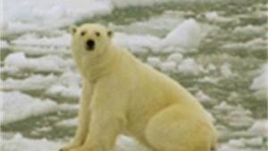 IJsberen en eskimo's gedoemd te verdwijnen