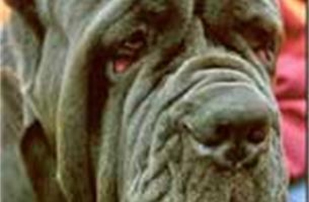 Hond grijpt spelende kleuter in Neeroeteren