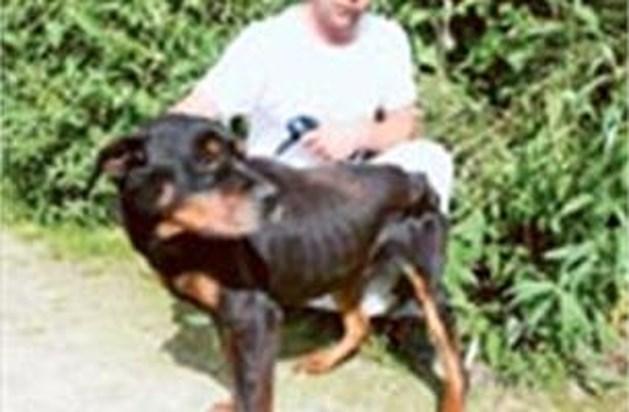 Verwaarloosde dieren weggehaald bij eigenaar