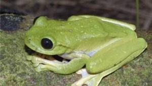 Wetenschappers ontdekken unieke kikker