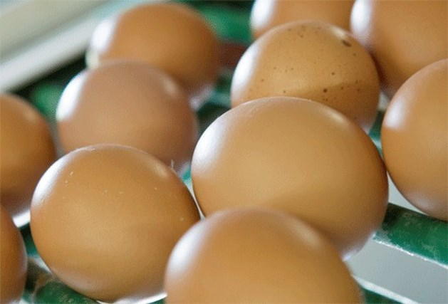 Kip legt 14 eieren in twee uur