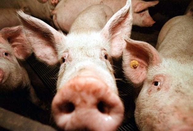 450 dode varkens door verwaarlozing op boerderij
