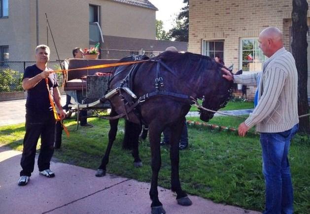 Genkenaren houden op hol geslagen paard tegen