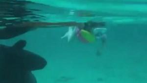 Ouders laten dochter (5) met haaien zwemmen