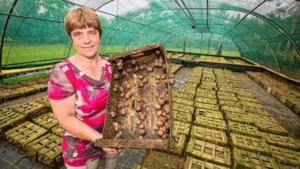'Slakkenboerin' gaat van start met 80.000 dieren