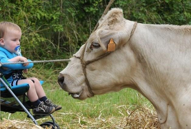 Alkense Oogstfeesten vieren jubileum met verse melk (fotoalbum)