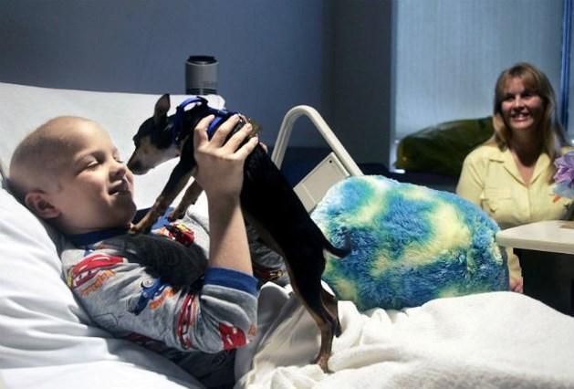 2 op de 3 patiënten overleven kanker