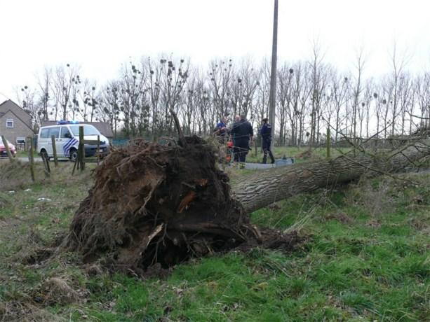 Buurt zonder stroom door ontwortelde boom