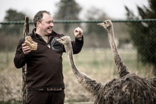 Vermiste struisvogel Boemel dood teruggevonden