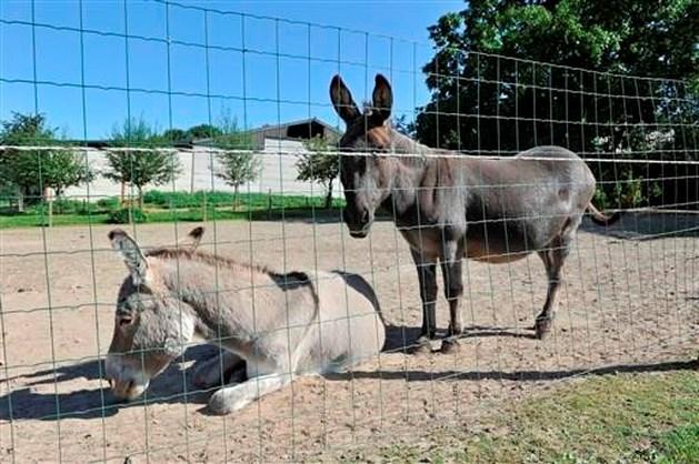 Agressieve ezels bijten man dood in Hongarije