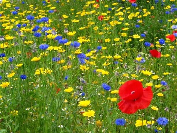 Gratis bloemzaad voor de bijtjes