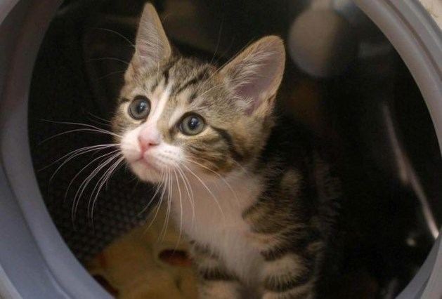 Kitten overleeft half uur in draaiende wasmachine