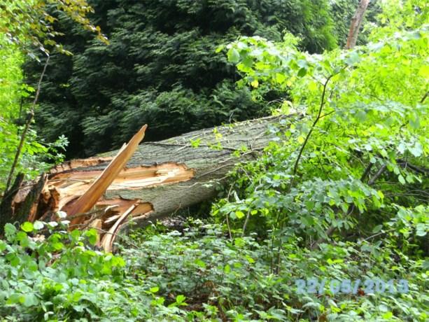 Omvallende boom belandt in tuin