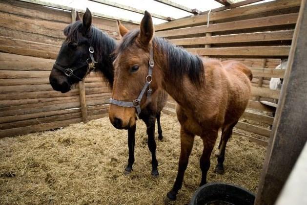 Paardensector kan meebetalen voor verwaarloosde paarden