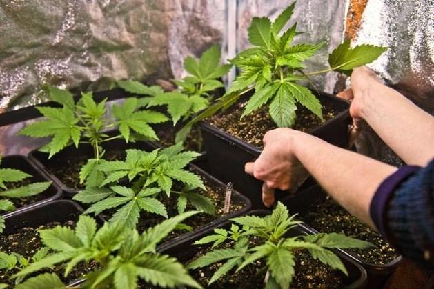 Rechter geeft paar opschorting van straf voor 1.400 wietplanten