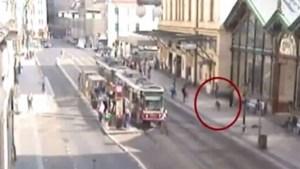 Everzwijn steekt rivier over en gaat citytrippen in Praag (video)